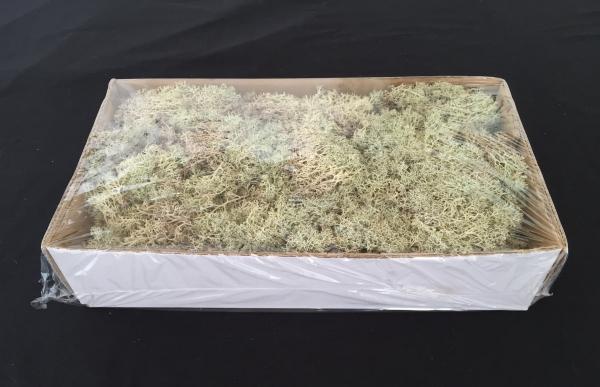 Caixa de Musgo Natural