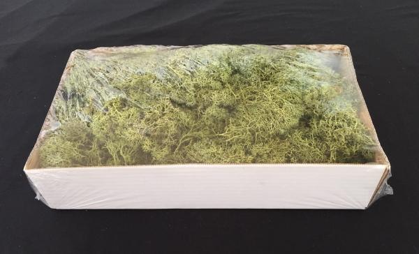 Caixa de Musgo Verde Escuro