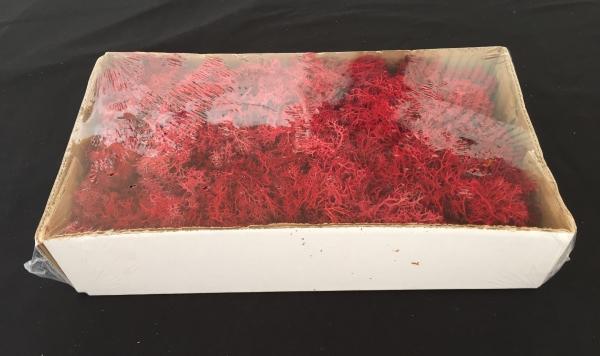 Caixa de Musgo Vermelho