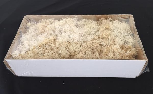 Caixa de Musgo Branco