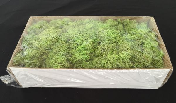 Caixa de Musgo Verde Claro